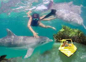 Nadando con Delfines + Tour Bote